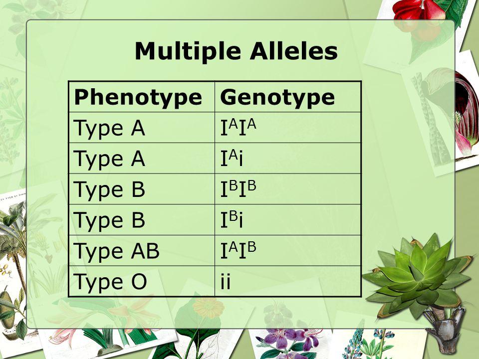 PhenotypeGenotype Type AIAIAIAIA IAiIAi Type BIBIBIBIB IBiIBi Type ABIAIBIAIB Type Oii
