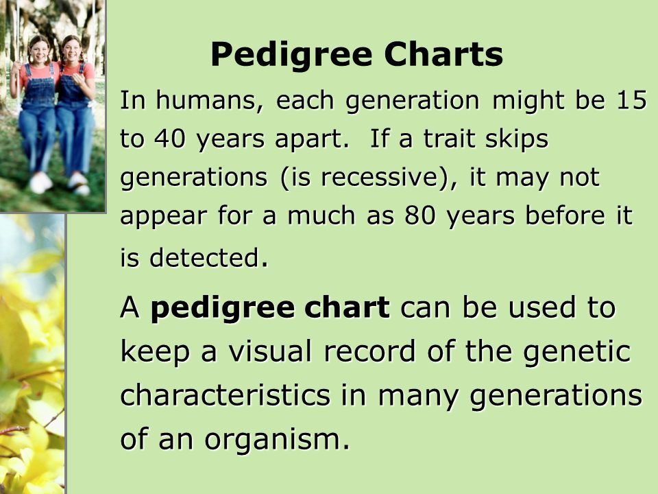 Pedigree Charts In humans, each generation might be 15 to 40 years apart. If a trait skips generations (is recessive), it may not appear for a much as
