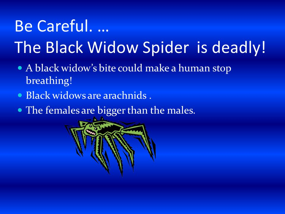 Be Careful. … The Black Widow Spider is deadly.