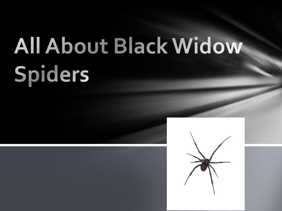 Black Widows eat bugs.Black Widows rap them up.