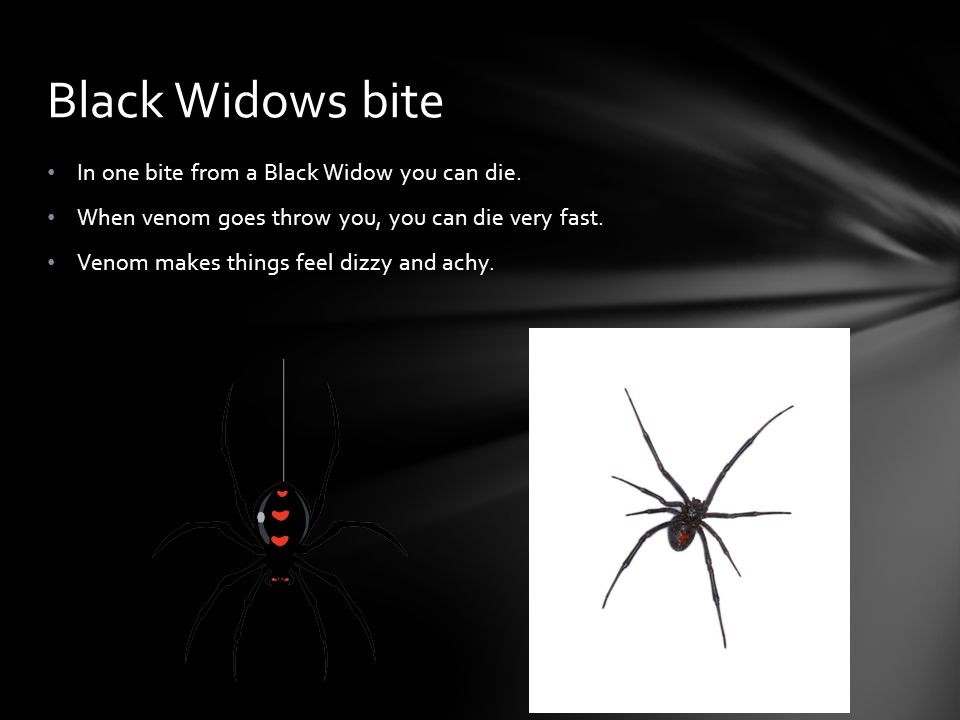 In one bite from a Black Widow you can die. When venom goes throw you, you can die very fast. Venom makes things feel dizzy and achy. Black Widows bit