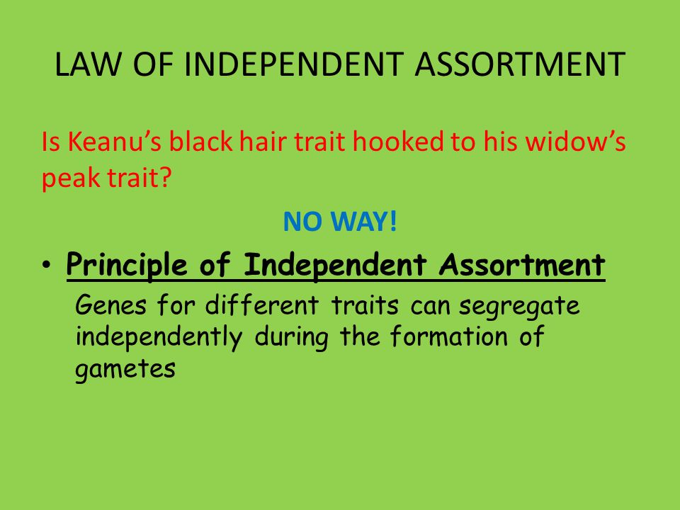 LAW OF INDEPENDENT ASSORTMENT Is Keanu's black hair trait hooked to his widow's peak trait.