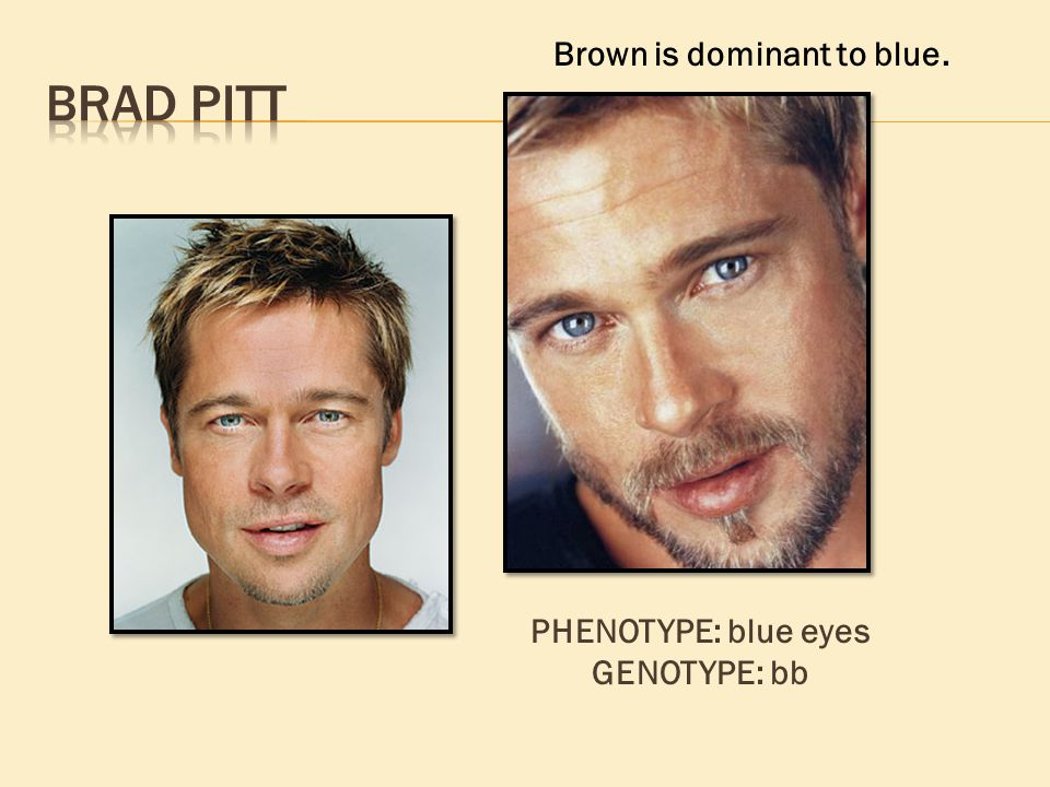 Brown is dominant to blue. PHENOTYPE: blue eyes GENOTYPE: bb