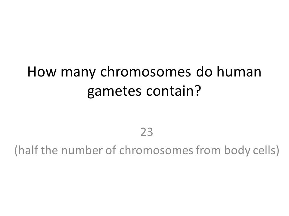 How many chromosomes do human gametes contain 23 (half the number of chromosomes from body cells)