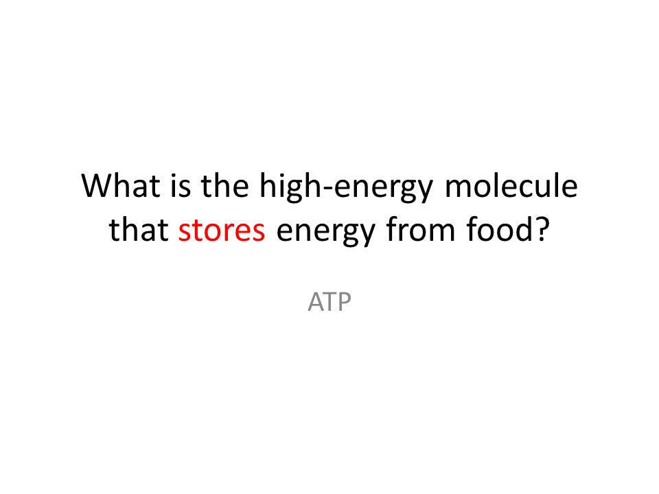 What is the high-energy molecule that stores energy from food ATP