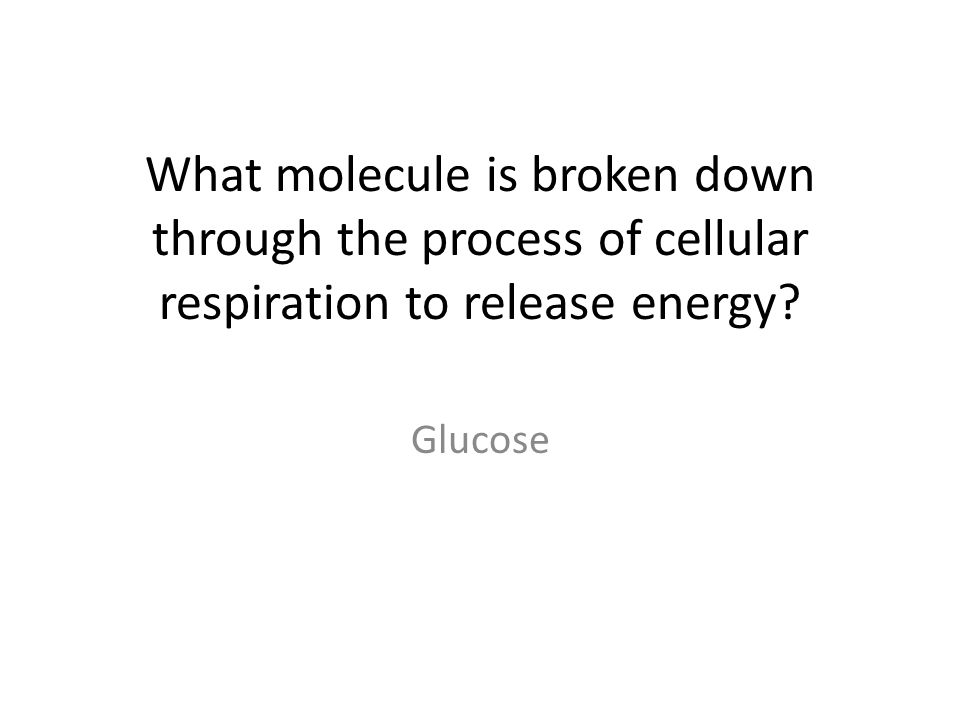 What molecule is broken down through the process of cellular respiration to release energy Glucose