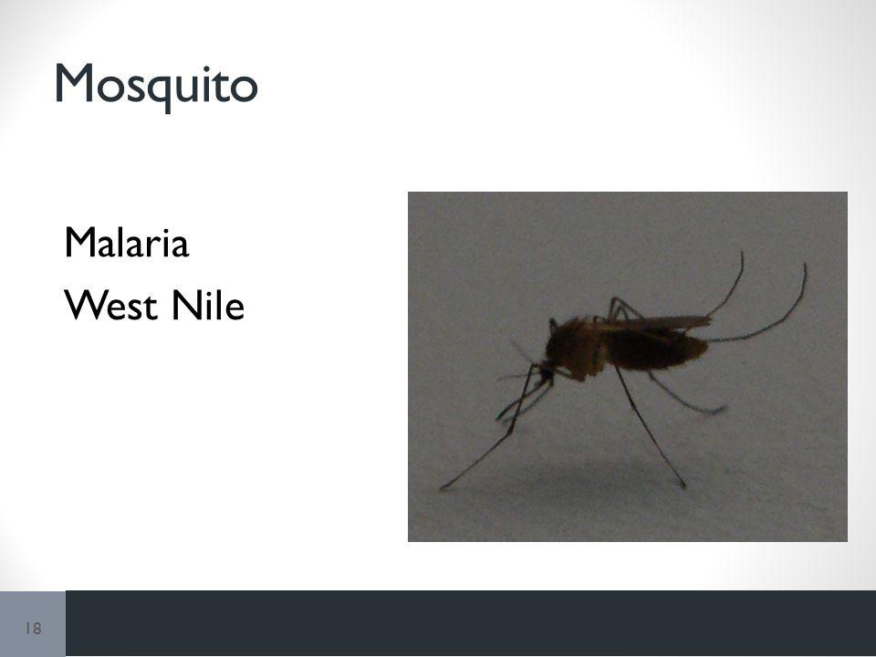 Mosquito Malaria West Nile 18