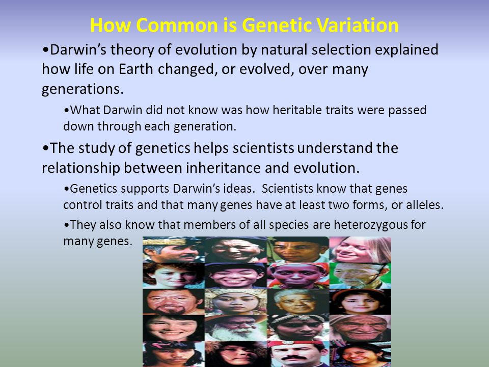 How Common is Genetic Variation Darwin's theory of evolution by natural selection explained how life on Earth changed, or evolved, over many generations.