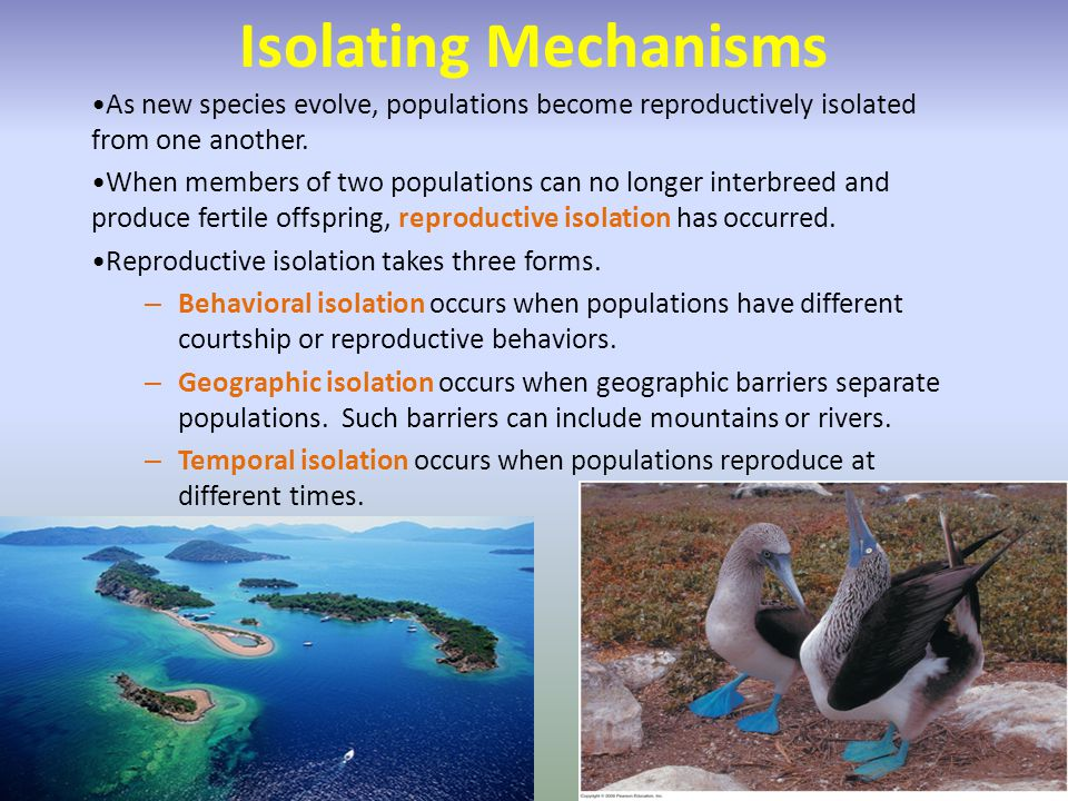 Isolating Mechanisms As new species evolve, populations become reproductively isolated from one another.