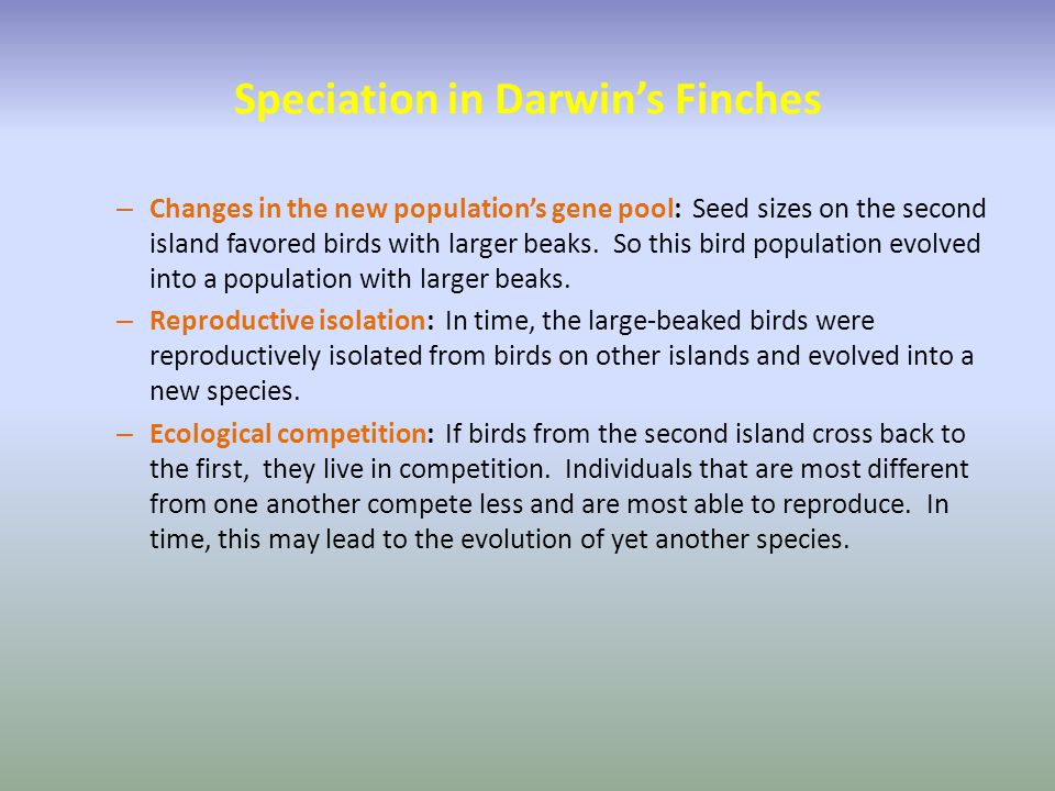 Speciation in Darwin's Finches – Changes in the new population's gene pool: Seed sizes on the second island favored birds with larger beaks. So this b