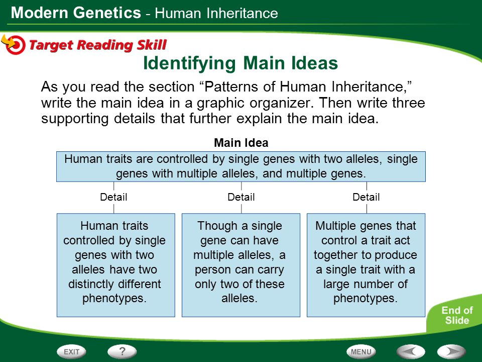 """Modern Genetics Main Idea Detail Identifying Main Ideas As you read the section """"Patterns of Human Inheritance,"""" write the main idea in a graphic orga"""