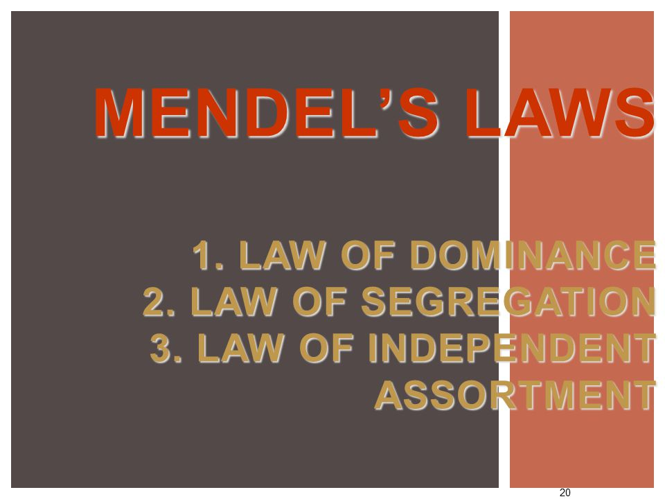 20 MENDEL'S LAWS 1. LAW OF DOMINANCE 2. LAW OF SEGREGATION 3. LAW OF INDEPENDENT ASSORTMENT