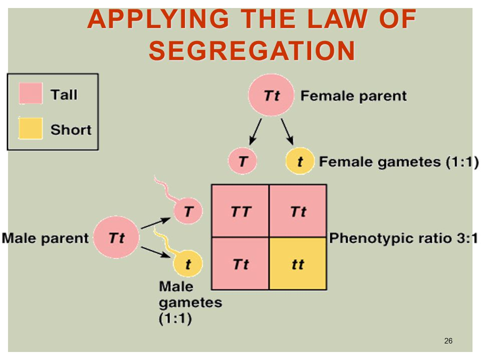 26 APPLYING THE LAW OF SEGREGATION