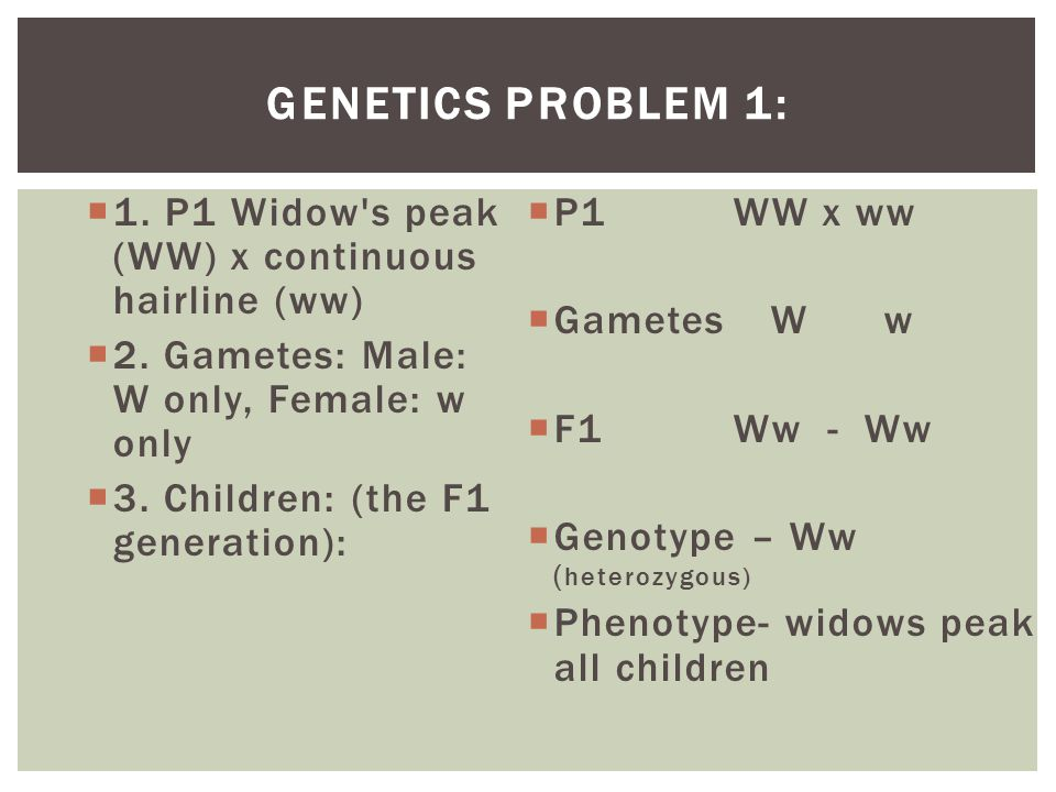 GENETICS PROBLEM 1:  1.P1 Widow s peak (WW) x continuous hairline (ww)  2.