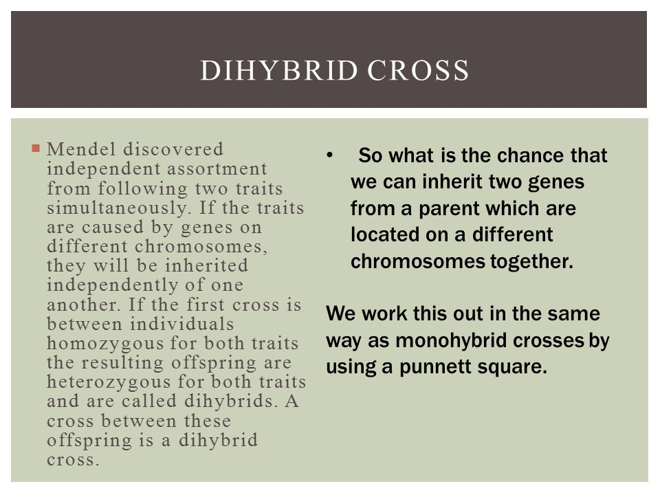 DIHYBRID CROSS  Mendel discovered independent assortment from following two traits simultaneously.