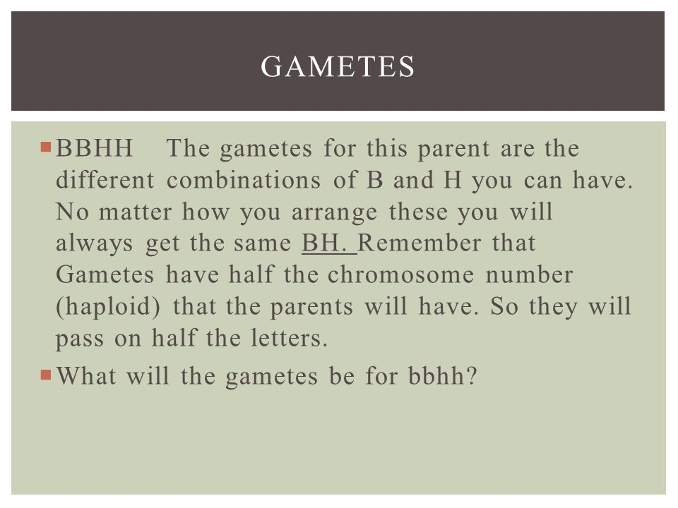 GAMETES  BBHH The gametes for this parent are the different combinations of B and H you can have.