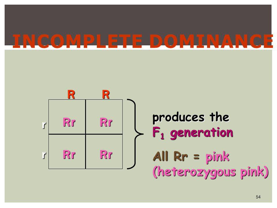 54 INCOMPLETE DOMINANCERrRrRrRr r rRR All Rr = pink (heterozygous pink) produces the F 1 generation