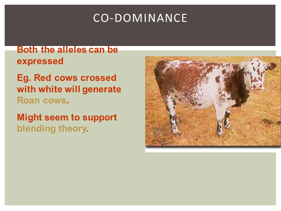 CO-DOMINANCE Both the alleles can be expressed Eg.