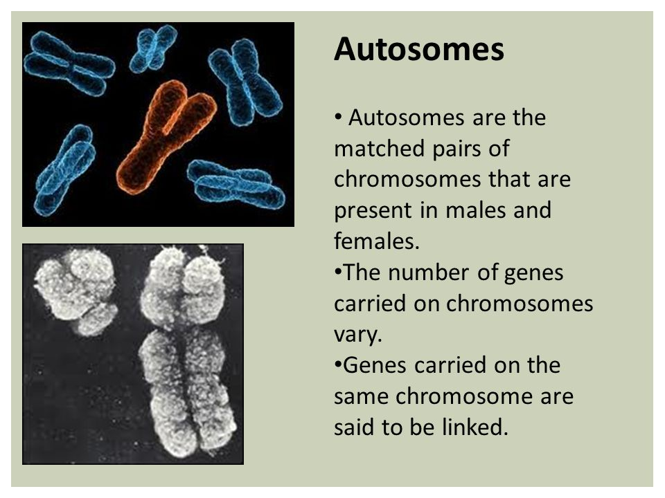 Autosomes Autosomes are the matched pairs of chromosomes that are present in males and females.