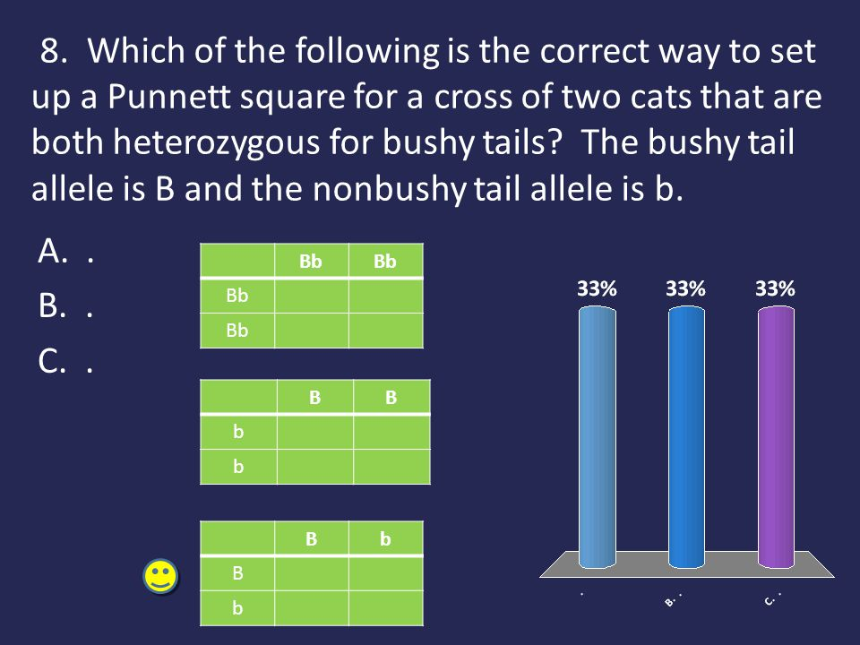8. Which of the following is the correct way to set up a Punnett square for a cross of two cats that are both heterozygous for bushy tails? The bushy