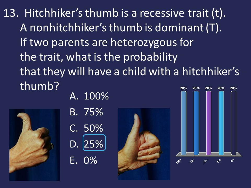 13. Hitchhiker's thumb is a recessive trait (t). A nonhitchhiker's thumb is dominant (T). If two parents are heterozygous for the trait, what is the p