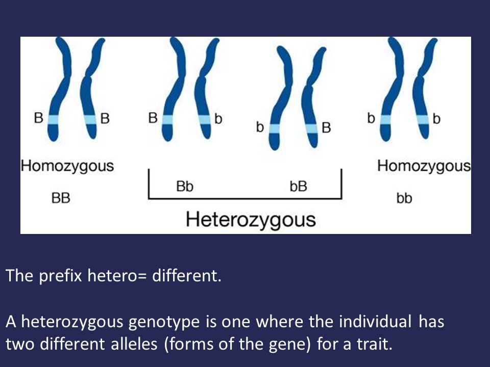 The prefix hetero= different. A heterozygous genotype is one where the individual has two different alleles (forms of the gene) for a trait.