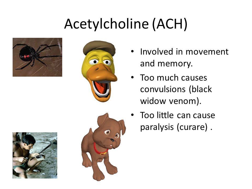 Acetylcholine (ACH) Involved in movement and memory.