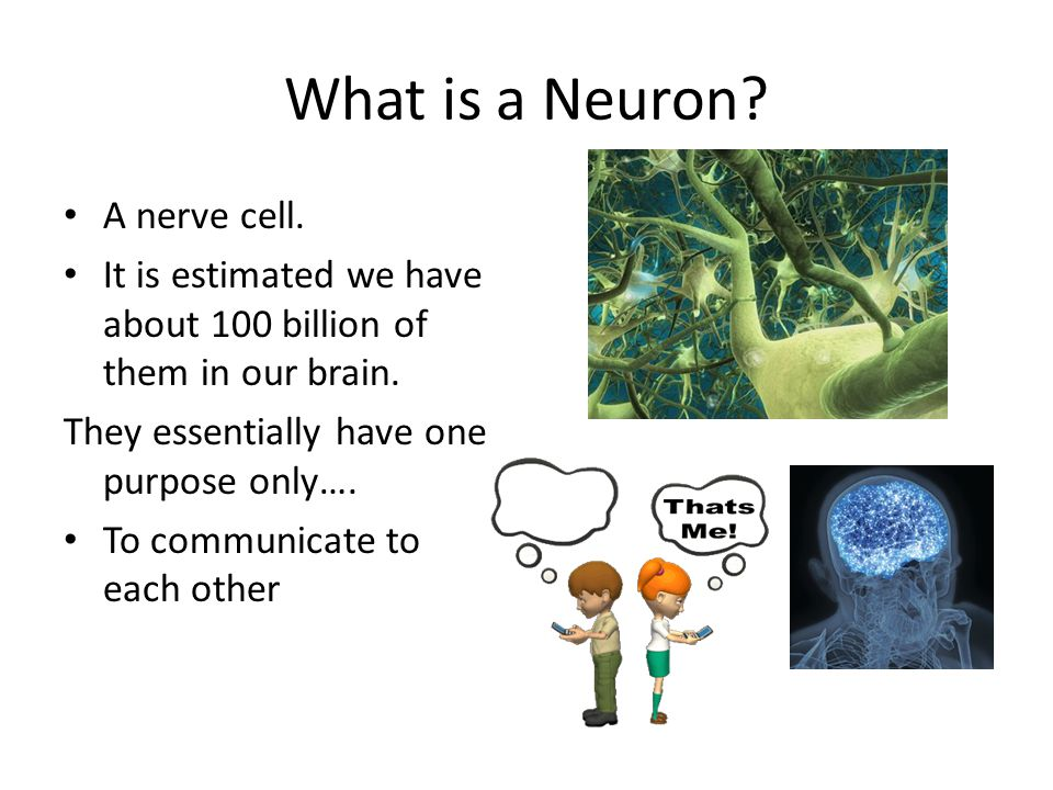 What is a Neuron. A nerve cell. It is estimated we have about 100 billion of them in our brain.
