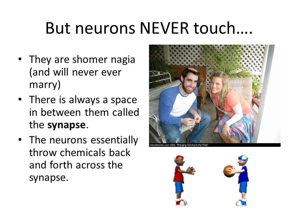 But neurons NEVER touch….