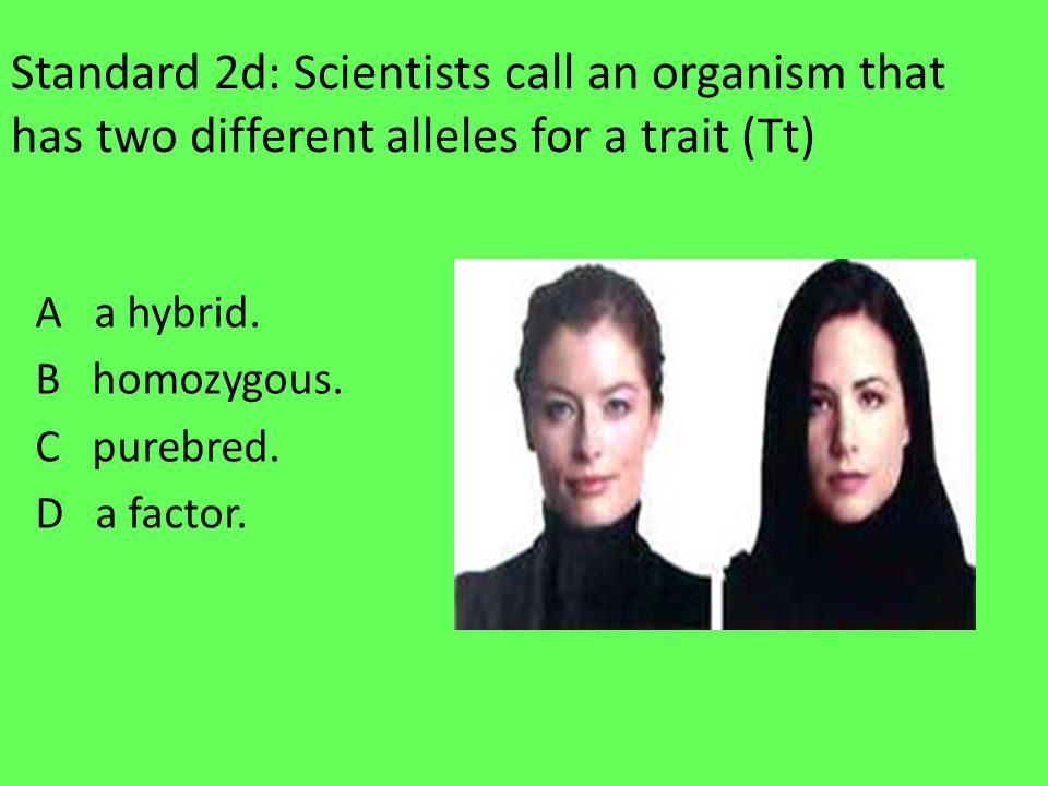 Standard 2d: Scientists call an organism that has two different alleles for a trait (Tt) A a hybrid.