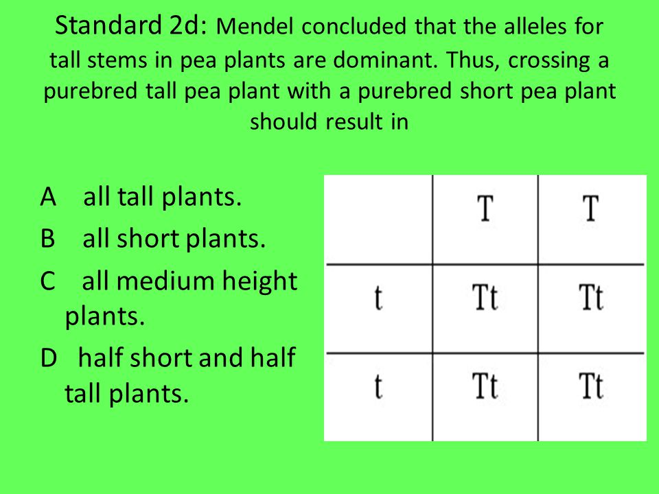 Standard 2d: Mendel concluded that the alleles for tall stems in pea plants are dominant.