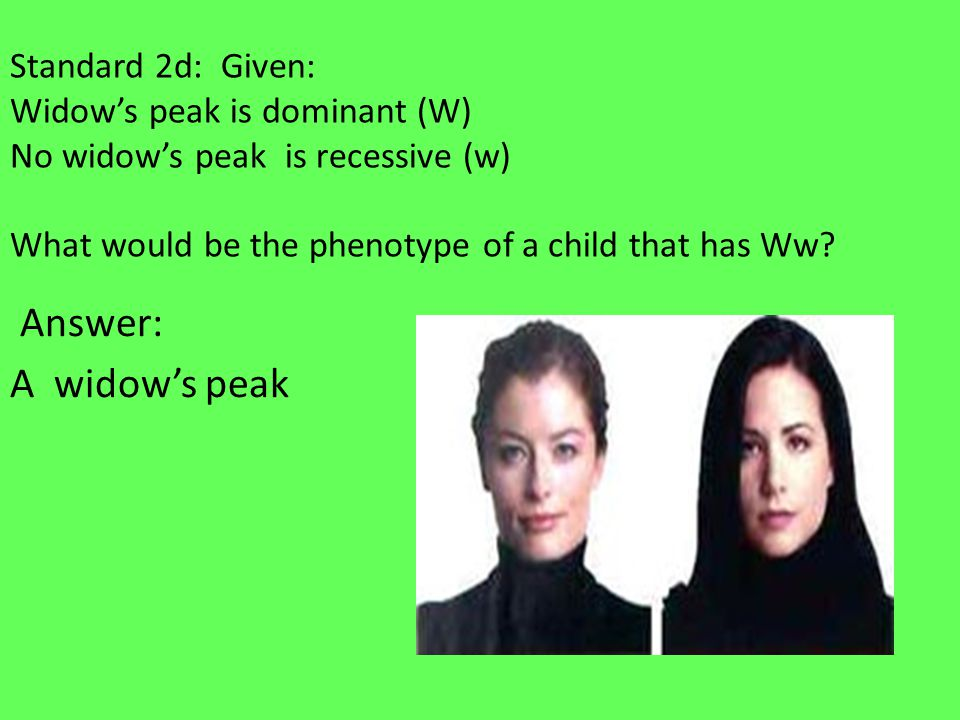 Standard 2d: Given: Widow's peak is dominant (W) No widow's peak is recessive (w) What would be the phenotype of a child that has Ww.