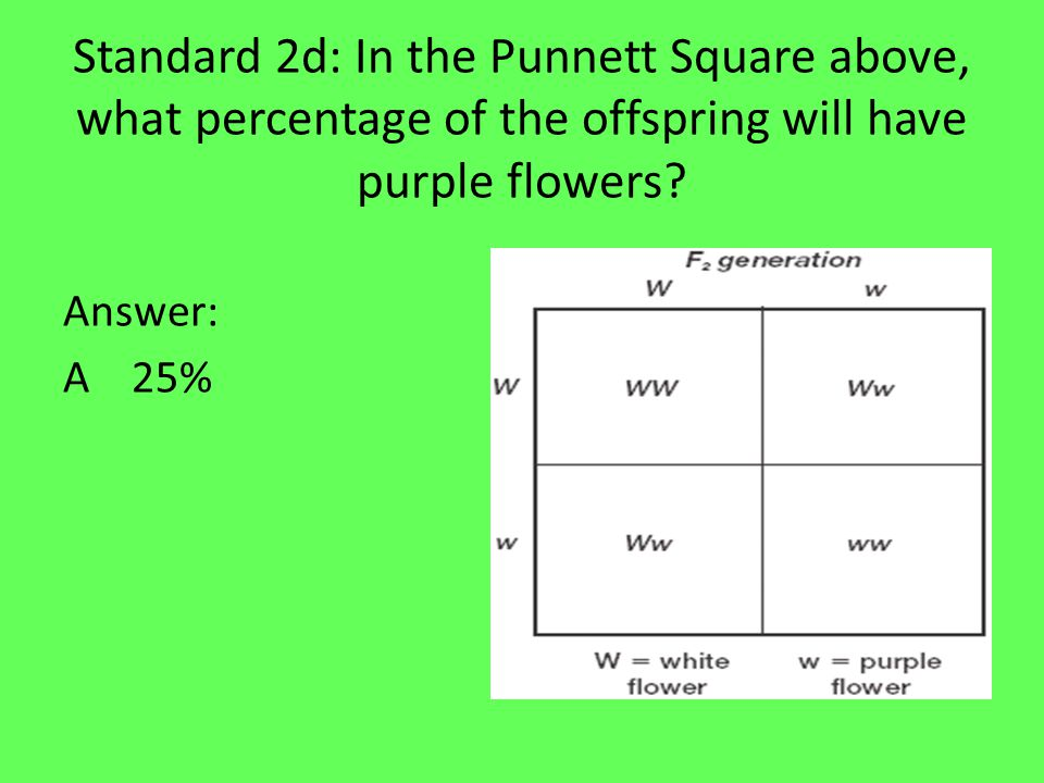 Standard 2d: In the Punnett Square below, what percentage of the offspring are capable of passing on either the trait for white flowers or the trait for purple flowers to their offspring.