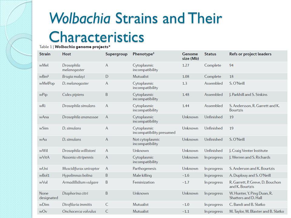 Wolbachia Strains and Their Characteristics