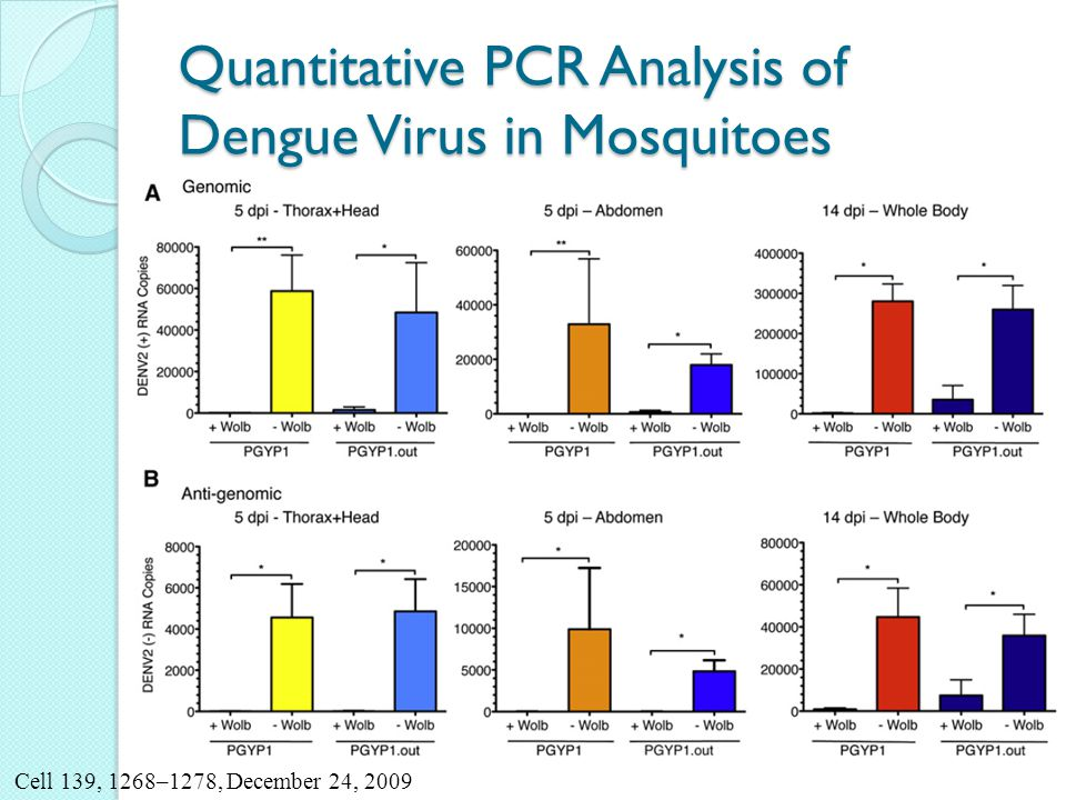 Quantitative PCR Analysis of Dengue Virus in Mosquitoes Cell 139, 1268–1278, December 24, 2009