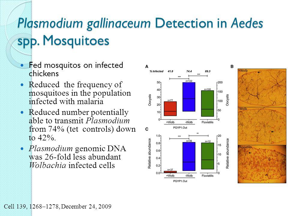 Plasmodium gallinaceum Detection in Aedes spp.
