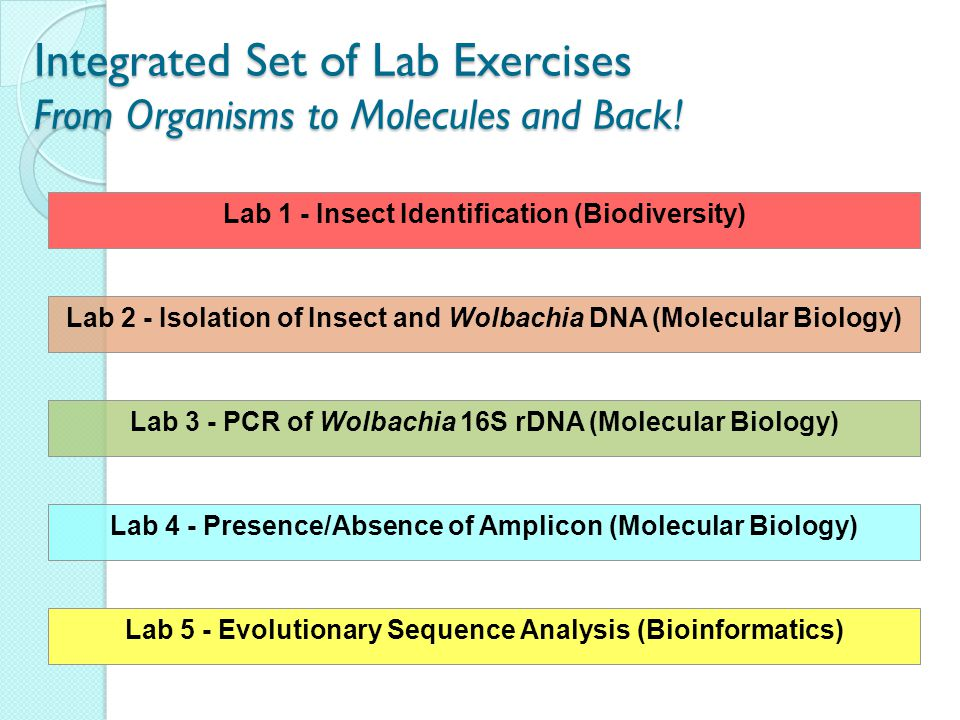 Integrated Set of Lab Exercises From Organisms to Molecules and Back.