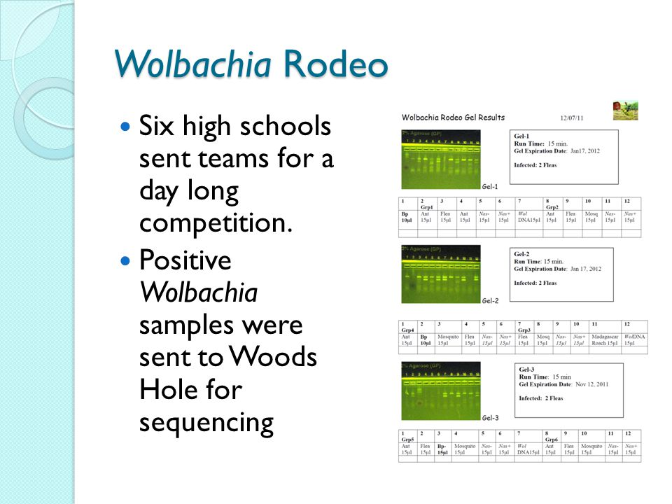 Wolbachia Rodeo Six high schools sent teams for a day long competition.