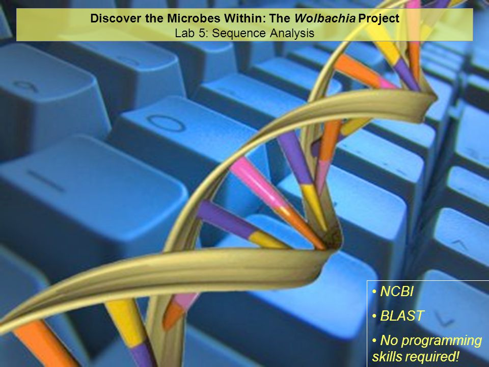 Discover the Microbes Within: The Wolbachia Project Lab 5: Sequence Analysis NCBI BLAST No programming skills required!