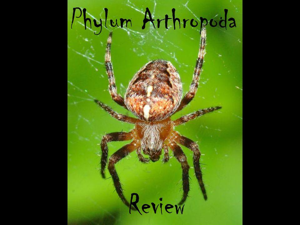 Phylum Arthropoda Review