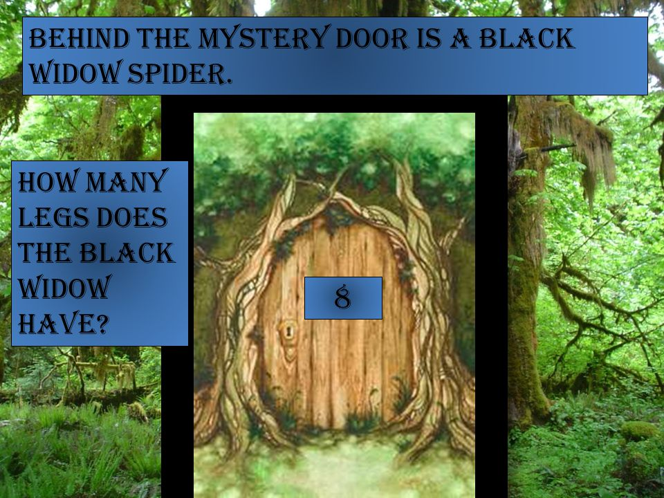 Behind the mystery door is a Black Widow Spider. How many legs does the black widow have 8