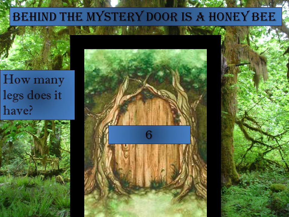 Behind the mystery door is a Honey Bee How many legs does it have 6