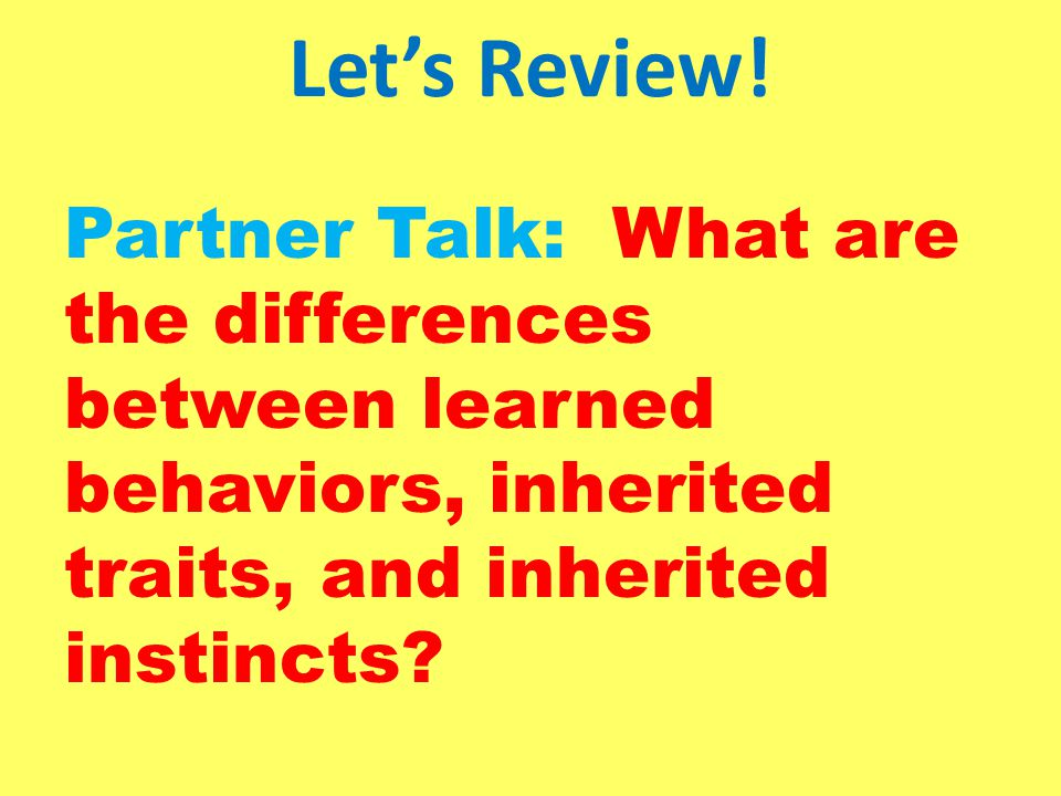 Let's Review! Partner Talk: What are the differences between learned behaviors, inherited traits, and inherited instincts?