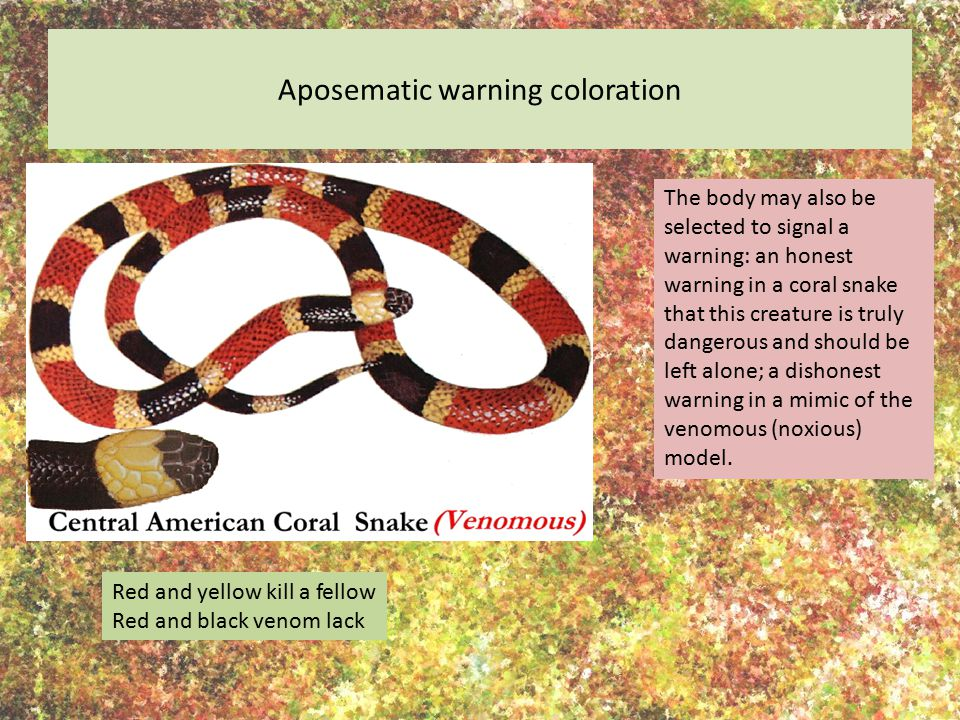Aposematic warning coloration The body may also be selected to signal a warning: an honest warning in a coral snake that this creature is truly danger