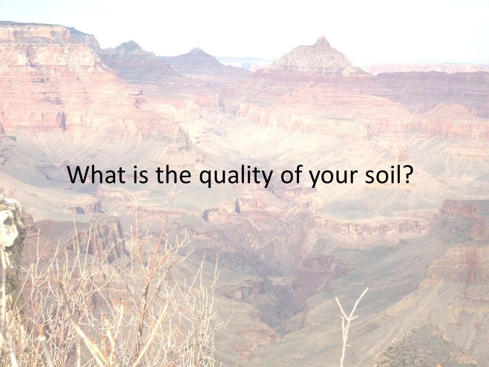 What is the quality of your soil
