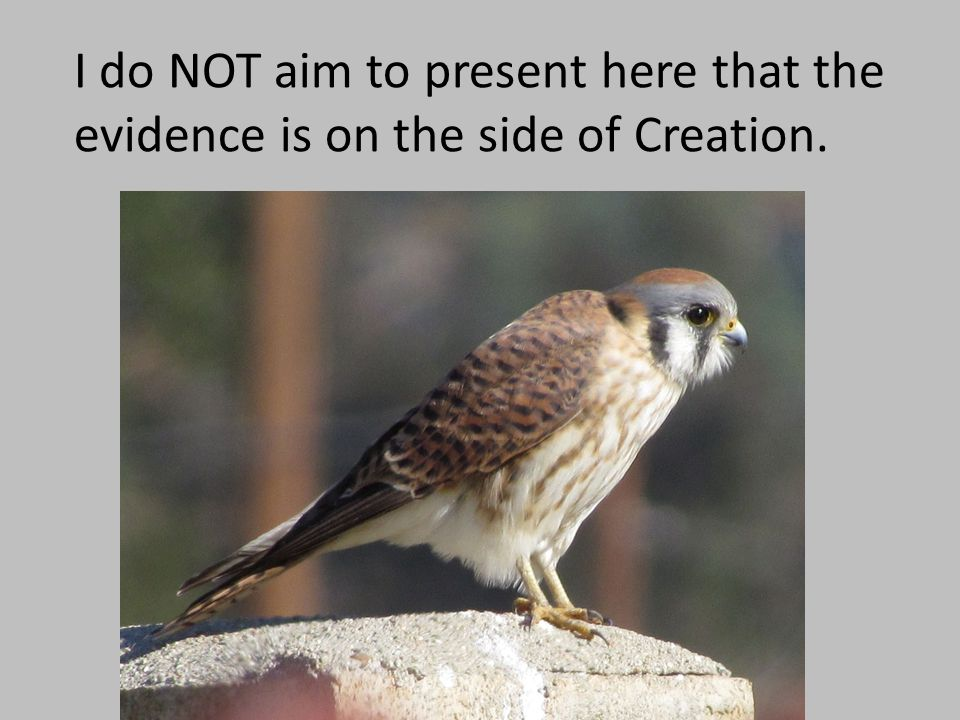 I do NOT aim to present here that the evidence is on the side of Creation.