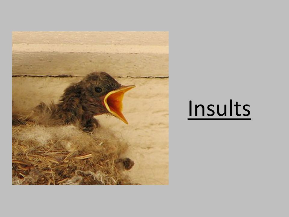 Insults http://www.scienceagainstevolution.org/v16i1e.htm