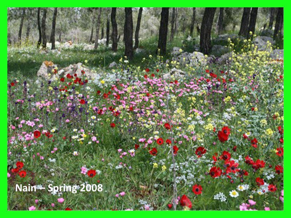 18 Nain – Spring 2008