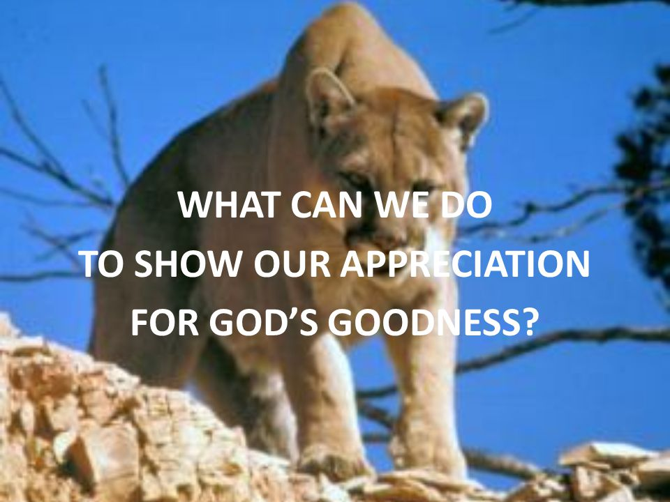 WHAT CAN WE DO TO SHOW OUR APPRECIATION FOR GOD'S GOODNESS