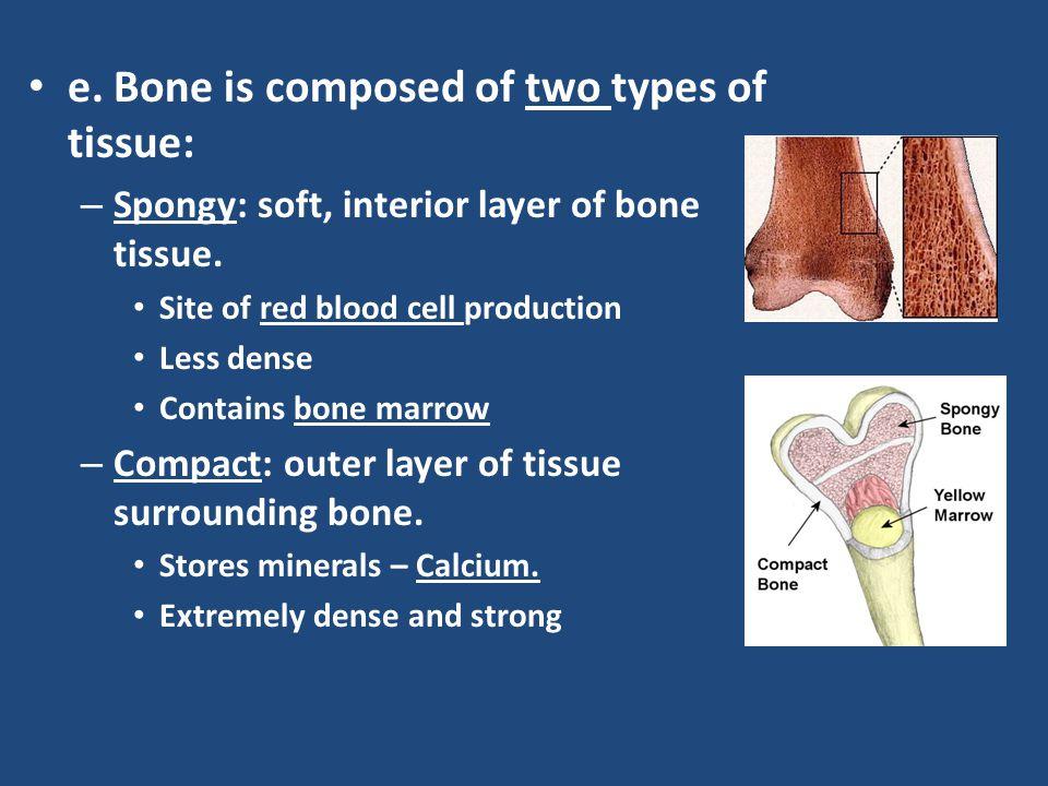 f.Bone _________ is found inside of bones.